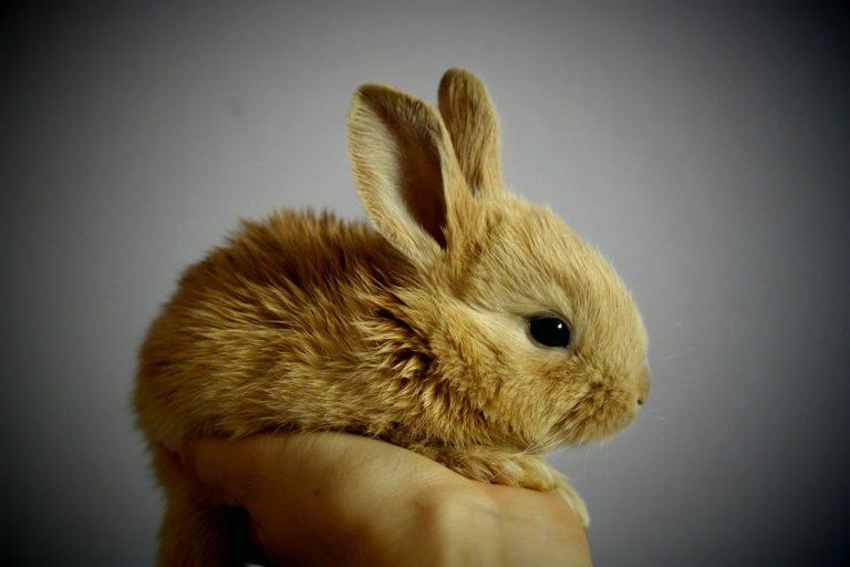 assurance pour lapin